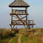 Putnu novērošanas tornis pie Lubāna ezera (Aleksandrs Lebeds)