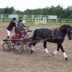 Latvijas zirgu audzētāju diena Latgalē