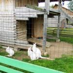 Mini zoo Rozīte
