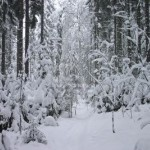 524458-snow-forest-5