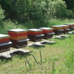 LEARN projekta ietvaros iegādātie Latvijas stāvstropi uz metāla paliktņiem dravas novietnē Zvejsolā, Nagļu pagastā, tiešā Lubāna ezera tuvumā